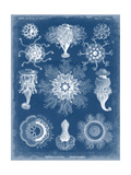 Marine Blueprint I Prints by  Vision Studio