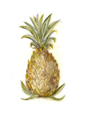 Pineapple Sketch I Poster by Ethan Harper