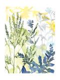 Layered Blooms I Affiches par Megan Meagher