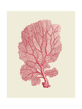 Corals Coral On Cream c Premium Giclée-tryk af Fab Funky