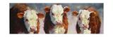 Winter Calves Posters by Carolyne Hawley