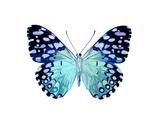 Butterfly in Metallic II Giclée-tryk af Julia Bosco