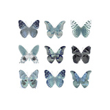 Butterfly Study in Blue II Giclee Print by Julia Bosco