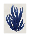 Sea Life - Indigo III Giclee Print by Melonie Miller