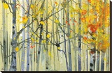Autumn Birches Stretched Canvas Print by Paul Bailey