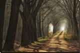 Paths Płótno naciągnięte na blejtram - reprodukcja autor Lars Van de Goor