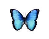 Vibrant Butterfly II Giclée-tryk af Julia Bosco