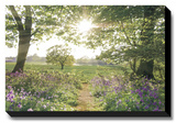 Something Beautiful Stretched Canvas Print by Assaf Frank
