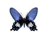 Vibrant Butterfly III Giclée-tryk af Julia Bosco