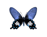 Vibrant Butterfly III Giclee Print by Julia Bosco