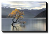 Undisturbed Stretched Canvas Print by Michael Cahill