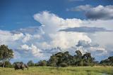 African Elephant (Loxodonta Africana) Drinking from Water, Okavango Delta, Botswana Fotografisk tryk af Wim van den Heever