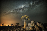 Quiver Tree (Aloe Dichotoma) with the Milky Way at Night Photographic Print by Wim van den Heever