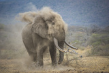 African Elephant (Loxodonta Africana) Bull Dust-Bathing, Chyulu Hills, Kenya Photographic Print by Wim van den Heever