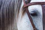Close Up of Horse Wearing Bridle, Sierra De Gredos, Avila, Castile and Leon, Spain Photographic Print by Juan Carlos Munoz