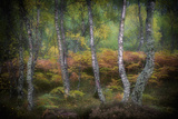 Autumnal Woodland Landscape, Cairngorms National Park, Scotland, United Kingdom Photographic Print by Wim van den Heever