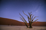Ancient Dead Camelthorn Trees (Vachellia Erioloba) at Night with Red Dunes Behind Photographic Print by Wim van den Heever