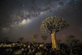 Quiver Tree Forest (Aloe Dichotoma) at Night with Stars and the Milky Way, Keetmanshoop, Namibia Fotodruck von Wim van den Heever