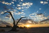 Sunrise Landscape in Sossusvlei, Namibia, July 2014 Fotodruck von Wim van den Heever