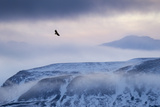 White-Tailed Eagle (Haliaeetus Albicilla) in Flight over Mountain Landscape at Dusk Photographic Print by Ben Hall