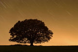English Oak Tree (Quercus Robur) Silhouetted Against Orange Sky with Star Trails Photographic Print by Solvin Zankl