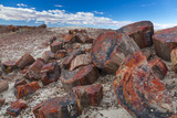Pieces of Petrified Trees - Wood, Petrified Forest National Park, Arizona, USA, February 2015 Photographic Print by Juan Carlos Munoz