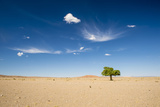 Elm Tree (Ulmus) in Gobi Desert, South Mongolia Photographic Print by Inaki Relanzon