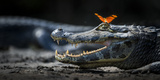 Julia Heleconia (Dryas Julia) Butterfly on Head of Yacare Caiman (Caiman Yacare) Pantanal, Brazil Photographic Print by Wim van den Heever