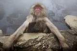 Japanese Macaque (Macaca Fuscata) Relaxing in Hot Spring in Jigokudani Fotografisk trykk av Mark Macewen