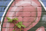 Bramble (Rubus Plicatus) Growing Up Wall Covered in Graffiti, Bristol, UK Photographic Print by Michael Hutchinson