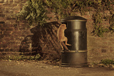 Urban Red Fox (Vulpes Vulpes) Cub Climbing into Litter Bin to Scavenge Food, West London, UK, June Photographic Print by Terry Whittaker