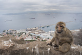 Barbary Macaque (Macaca Sylvanus) Sitting with Harbour of Gibraltar City in the Background Photographic Print by Edwin Giesbers