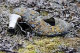Old High Heeled Shoe Covered in Lichen, Wrangel Island, Far Eastern Russia. September 2010 Fotografisk tryk af Sergey Gorshkov