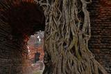 Historical Building in Ishwaripur, Overgrown by a Banyan Tree (Ficus Benghalensis), Bangladesh Fotografisk tryk af Dr. Gertrud Neumann-Denzau