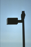 Great Horned Owl (Bubo Virginianus) Perched on Top of a Lamp Post, Colorado, Usa, January Photographic Print by  Shattil & Rozinski