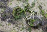 Discarded Bicycle Covered in Algae in Harbour at Low Tide. Portsmouth, UK, July 2013 Fotografisk tryk af Alex Hyde