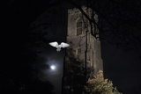 Barn Owl (Tyto Alba) Flying Past the Tower of St James Church with Moon Behind Photographic Print by Ernie Janes