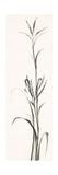 Gray Grasses IV Art by Chris Paschke