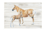 Horse and Colt on Wood Poster by Emily Adams
