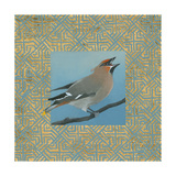 Cedar Waxwing Border Posters by Kathrine Lovell