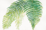 Ferns III Square Prints by Chris Paschke