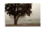 Calm Mist no Limb Kunstdruck von Debra Van Swearingen