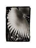 Palm Frond II v2 Giclée-Premiumdruck von Debra Van Swearingen
