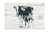 Cow and Calf on Wood Prints by Emily Adams