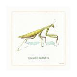 My Greenhouse Pray Mantis Print by Lisa Audit