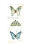 My Greenhouse Butterflies VI Art by Lisa Audit