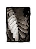 Tropical Plant I Giclée-Premiumdruck von Debra Van Swearingen