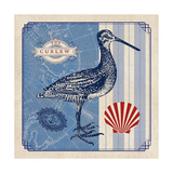 Sea Bird III Prints by  Studio Mousseau