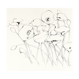 Black Line Poppies I Prints by Shirley Novak