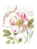 Rainbow Seeds Botanical II Posters by Lisa Audit